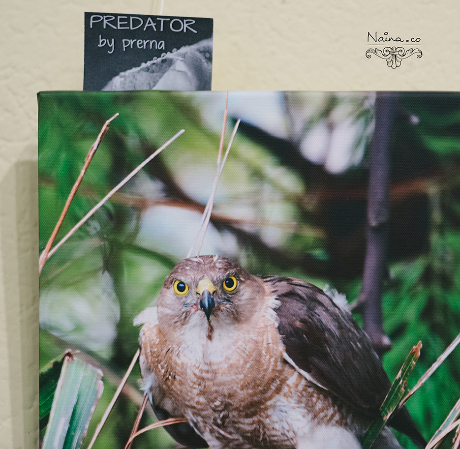 Prerna Solo Photography Exhibition of Marco photographs and wildlife at India Habitat Center as captured by photographer Naina Redhu.