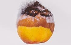 Rotten-Fruit-Portrait-Fine-Art-Luxury-Lifestyle-Photographer-Naina.co-Raconteuse