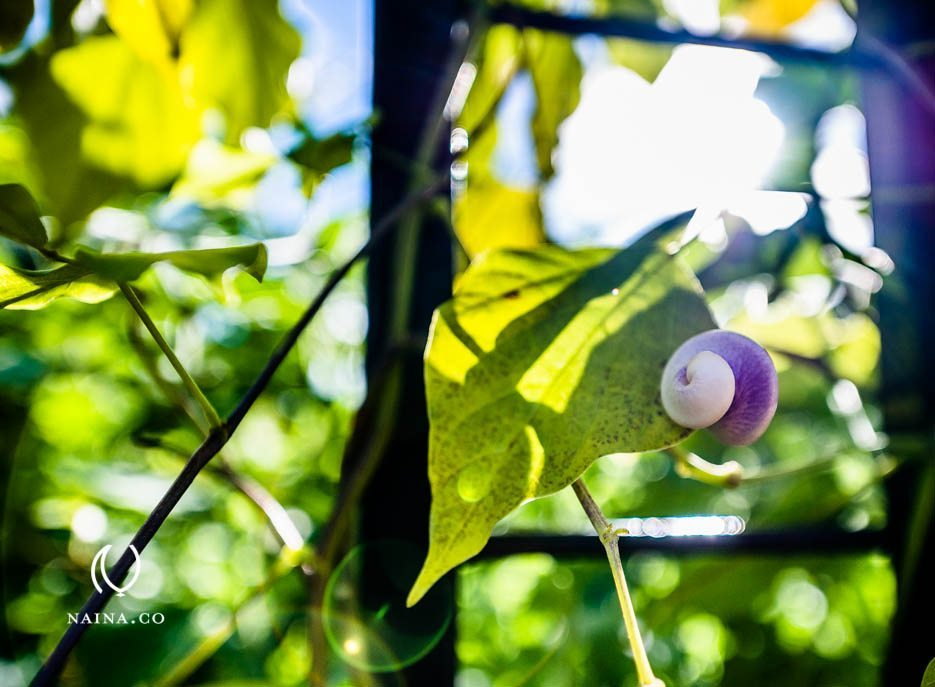 EyesForLondon-Kew-Botanical-Gardens-England-Naina.co-Raconteuse-Art-Nature-Photographer