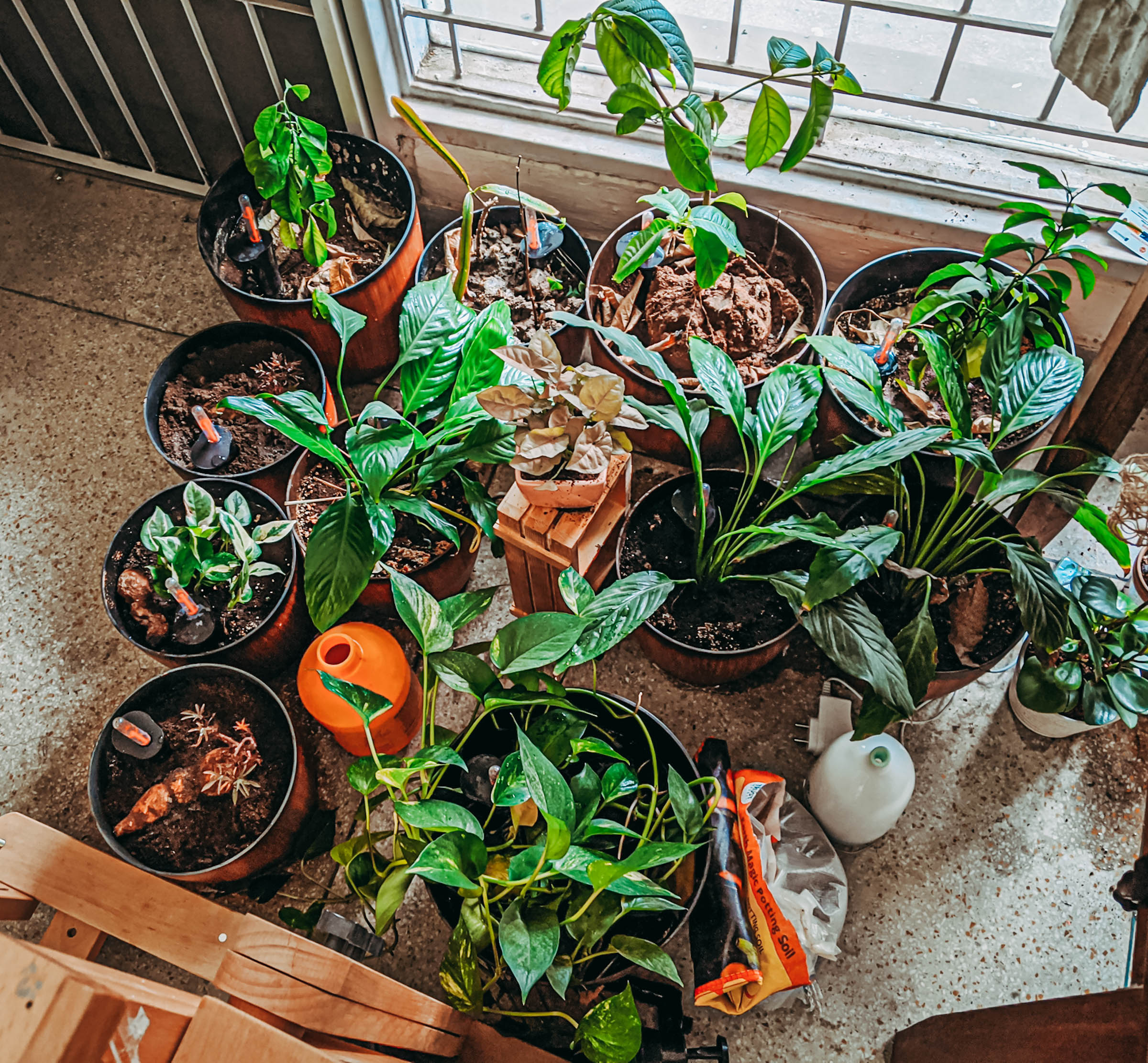 naina.co, naina redhu, self-watering pots, plastic pots, plant pots, flower pots, self-watering plant pots, amazon india, india, indoor plants, apartment plants, indoor garden, coco peat, soil, home garden, gardening, green fingers